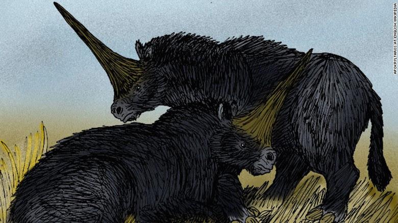 véritable fossile licorne, licorne réelle siberian, véritable fossile licorne siberian, véritable trouvaille licorne siberian, vraie licorne siberian parcouraient la terre il y a 30000 ans