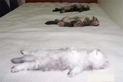3 sleeping cats