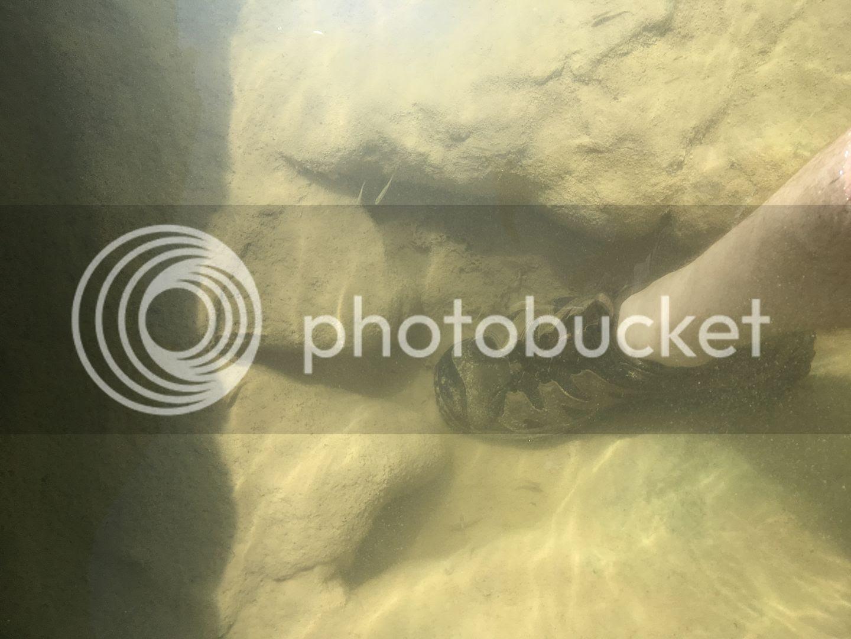 http://i1302.photobucket.com/albums/ag133/glitchmo1/IMG_6863_zps5euevxby.jpg
