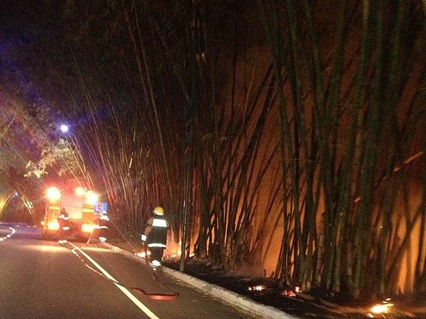 Fogo atingiu bambuzal na noite de quarta-feira (6), em Salvador, na Bahia (Foto: Diego Tavares/ Arquivo Pessoal)
