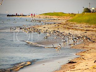 Places to Visit in Cape May