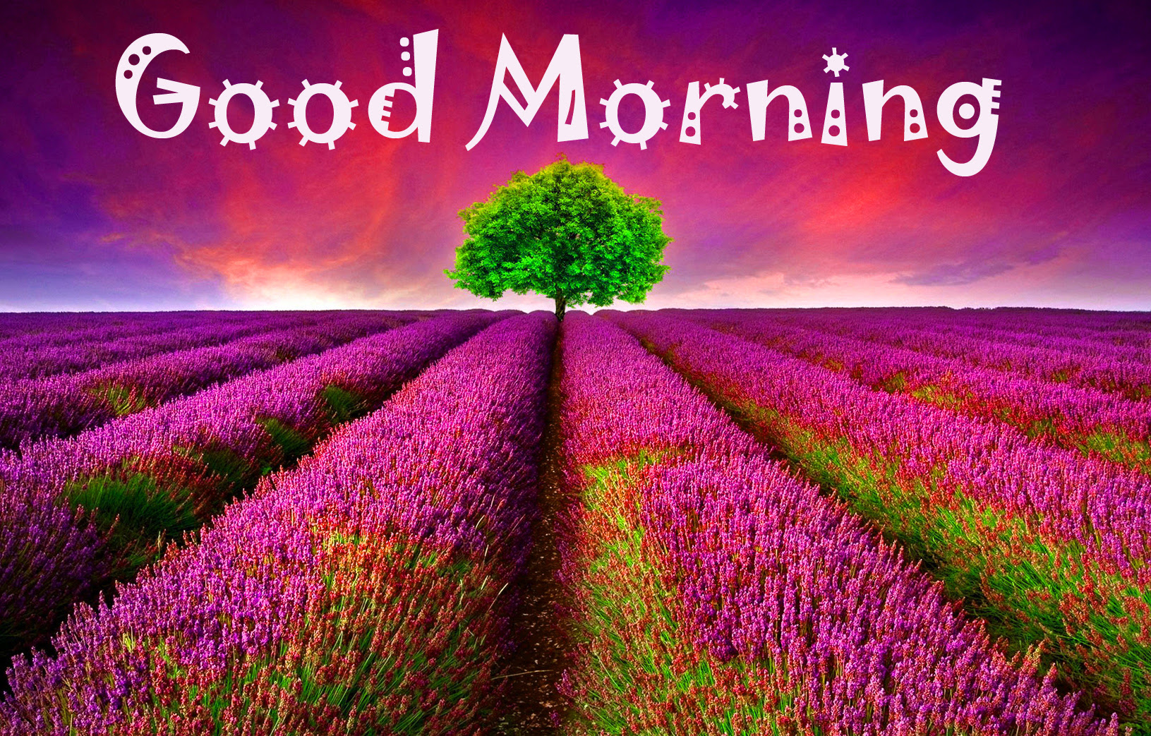 Latest Good Morning Images Wallpaper Photo Pics Hd Download For