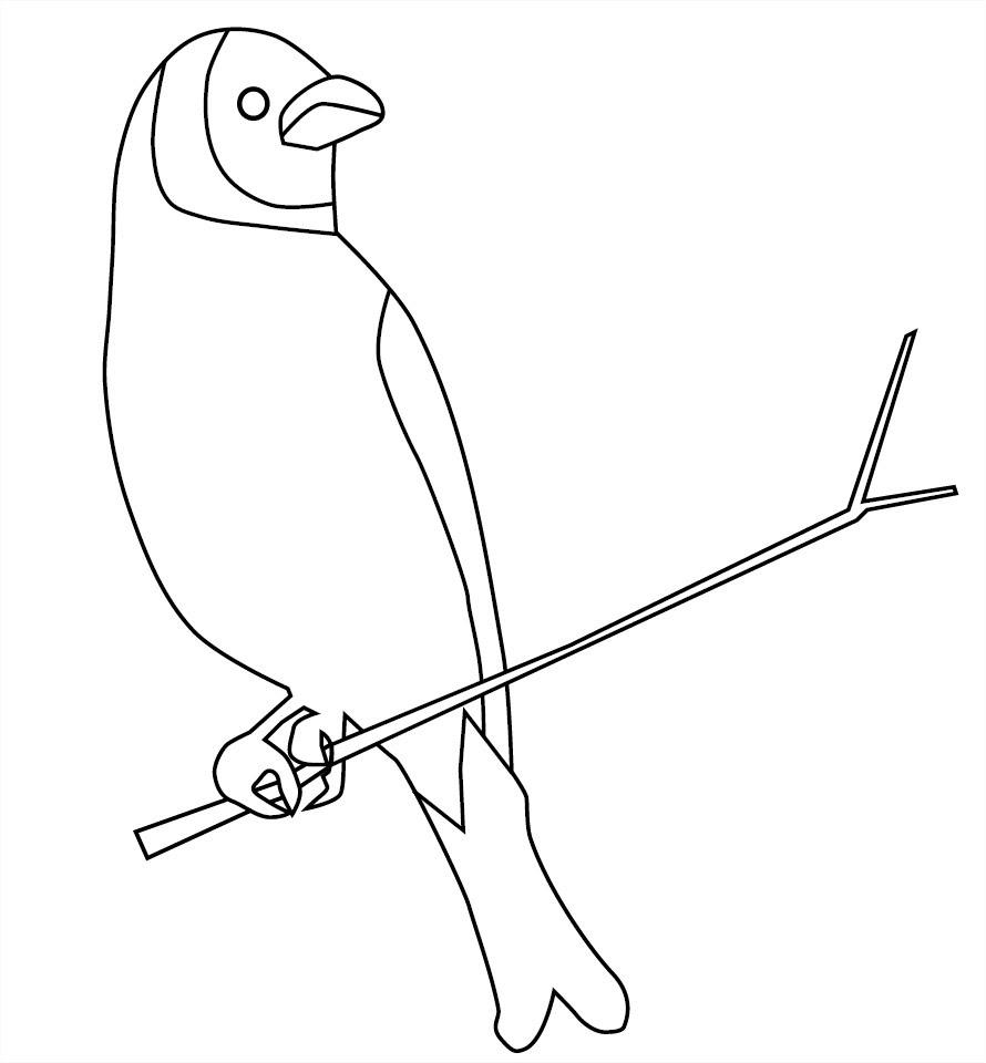 Coloriage Dun Oiseau Sur Une Branche Darbre à Imprimer Et Colorier