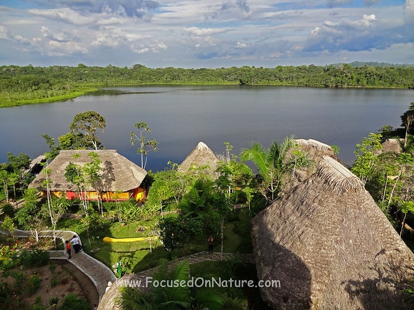 View From Napo Wildlife Center Tower