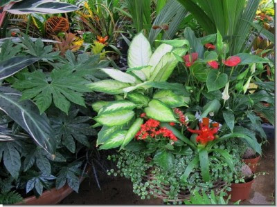 http://www.guiadejardineria.com/wp-content/uploads/2010/12/Plagas-y-enfermedades-mas-comunes-de-las-plantas-de-interior-400x300.jpg