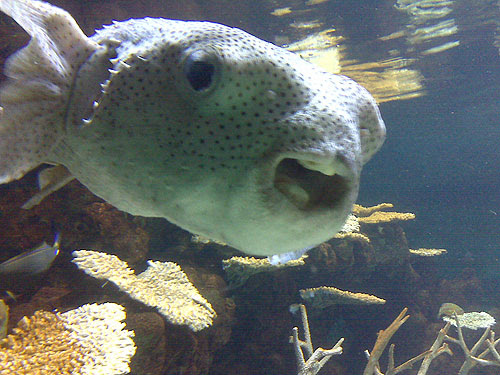 mouth fish