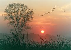 Autumn dawn