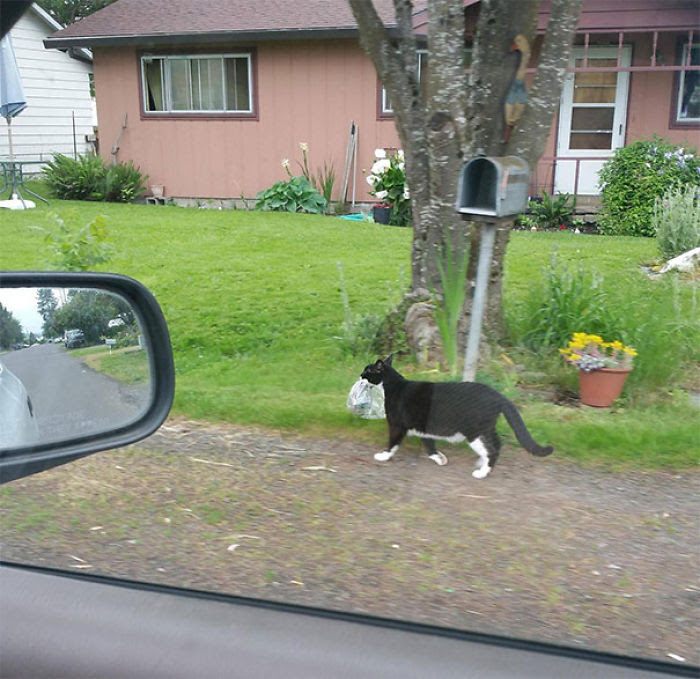 I Found Out Who Has Been Stealing My Paper. Followed This Guy 3 Blocks, He Wasn't Fazed