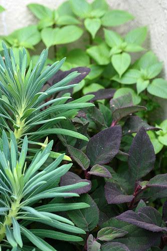 one corner of foliage