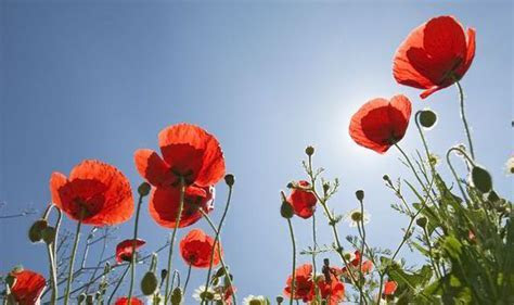 Top 10 facts about poppies   Top 10 Facts   Life & Style