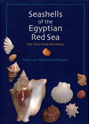 Seashells Of The Egyptian Red Sea The Illustrated Handbook