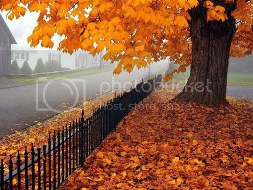 Autumn Pictures, Images and Photos
