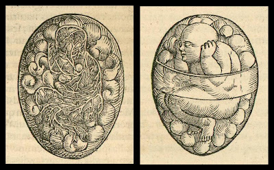 advanced embryo in the renaissance