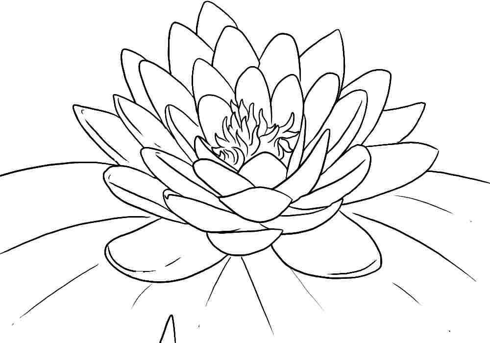 940 Coloring Pages Of Flowers For Preschool Pictures