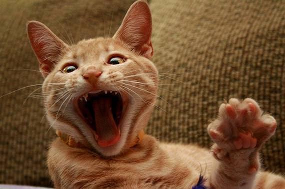 zevalice08 Gambar Anak Kucing Menguap dengan Sangat Comel