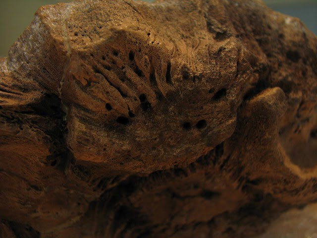 Stygimoloch dome
