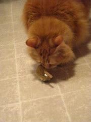 Jasper checks out the remote control mouse