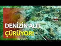 Denizin Altı Çürüyor, Deniz Canlıları Ölüyor! - TGRT Haber TV