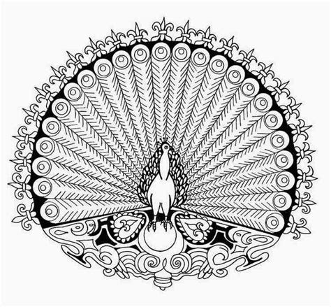 peacock coloring pages  kids  coloring pages