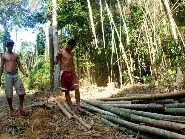 Bambu deve ser usado como material de construção sustentável (Foto: Bruno Imbroisi/ Arquivo pessoal)