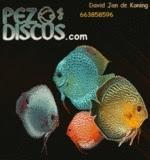 PezDiscus
