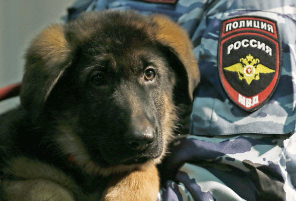 Image result for russia send a dog to the france police officer
