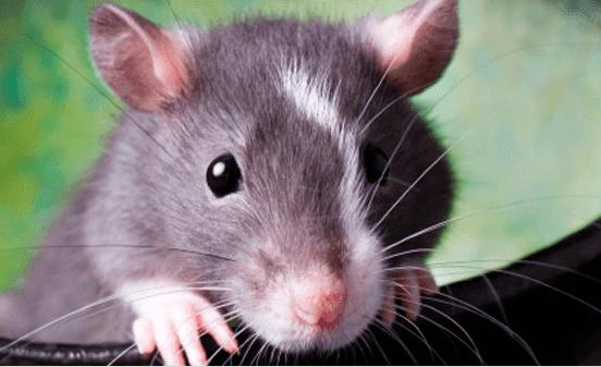 Защита проводов от кошек, собак, грызунов