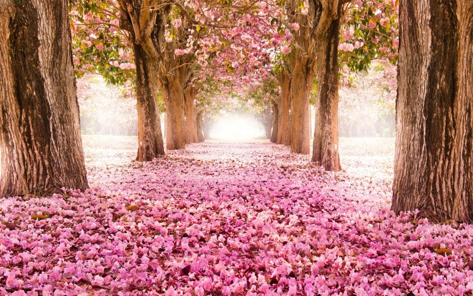 Pink Indus Flowers Path Trees Beautiful Scenery Wallpaper