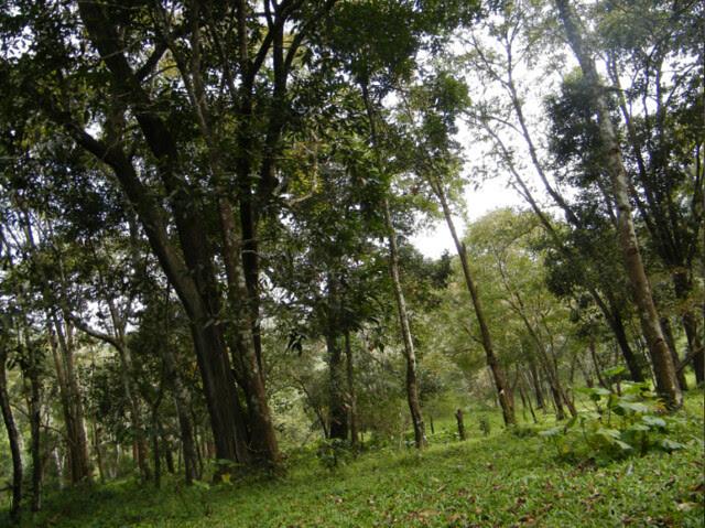 Deep inside Periyar Tiger Reserve