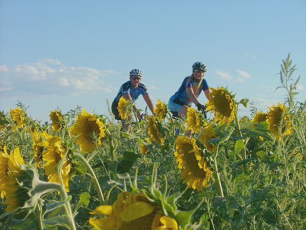 Tour de Sunflowers