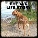 Sheba's Life Story