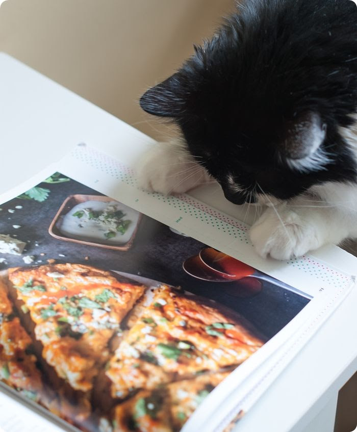 kitty reads a cookbook