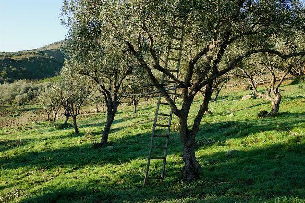 Photo: harvesttotable.com
