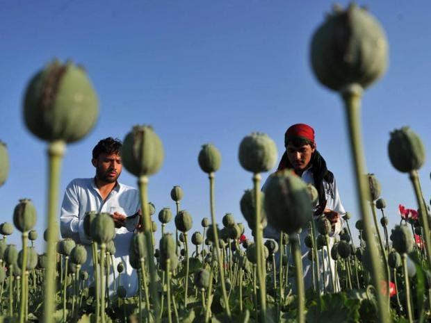 21-Helmand-Poppies-AFPGet.jpg