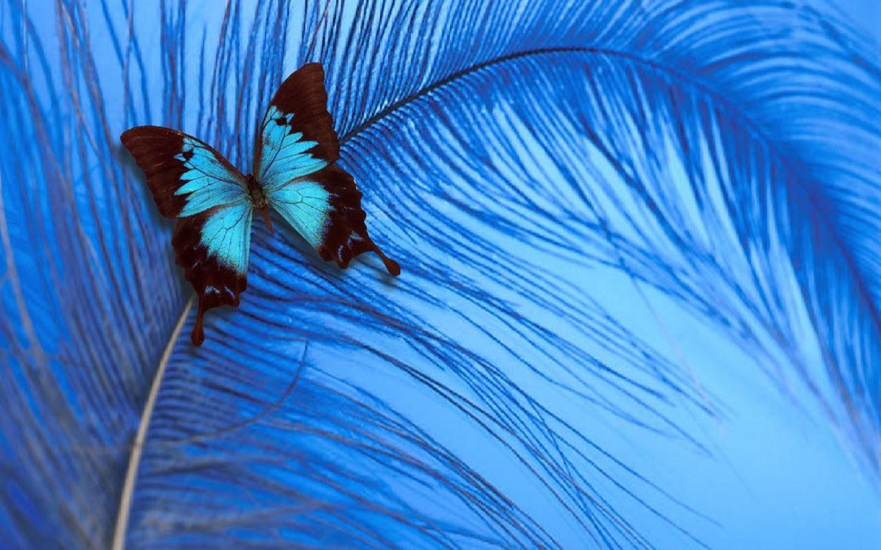 Blue Butterfly - yorkshire_rose Wallpaper (20519864) - Fanpop