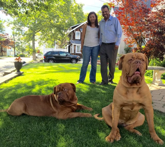 Humphrey, left, and Scarlett with owners Lizka and Jose Baez of Bogota. The dogs broke records for their breed, Dogue de Bordeax, at the Westminster Kennel Club's dog show in February.
