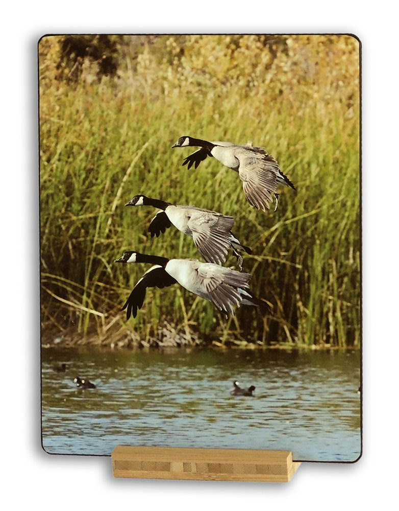 http://www.amazon.com/Canadian-Geese-Heather-Walnut-California/dp/B00T7BVYG2/ref=sr_1_15?ie=UTF8&qid=1423373276&sr=8-15&keywords=wcm+photography