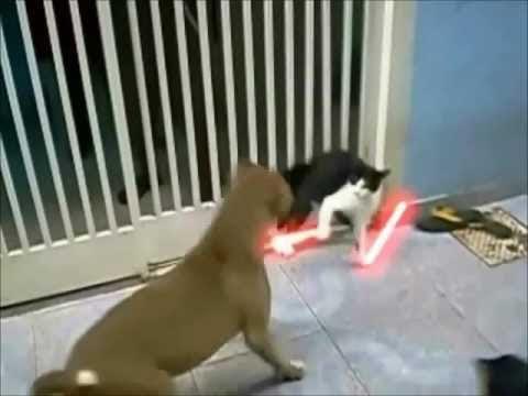 video que muestra a un gato batallando contra 2 perros con una espada laser