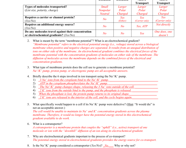 34 73 Cell Transport Worksheet Answers - Notutahituq ...