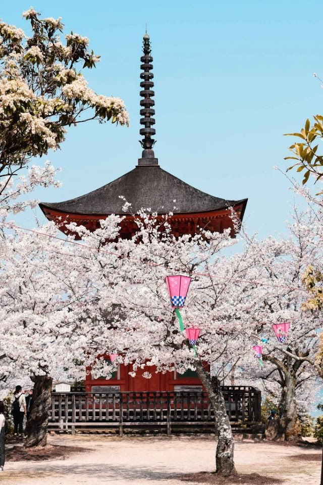 SAKURA JAPAN – A GUIDE TO ENJOY THE CHERRY BLOSSOM FESTIVAL | SPRING 2019