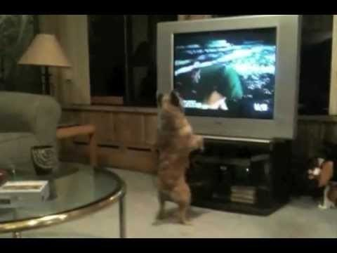 Cat Protects Kid From Dog Video