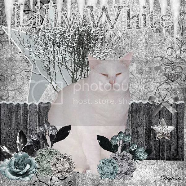 Snowcats Project,Domestic Cat,Winter,Snow,Holiday Glitter,Happy Holidays