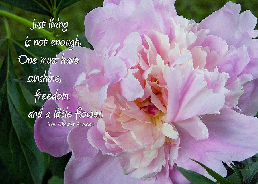 Flower Photography Quotes. QuotesGram