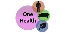 One Health concept interrelationship between human, animal and environment