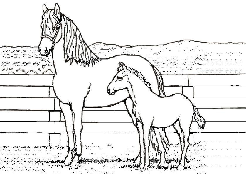 Bilder zum ausmalen Pferde 8 | Bilder zum Ausmalen
