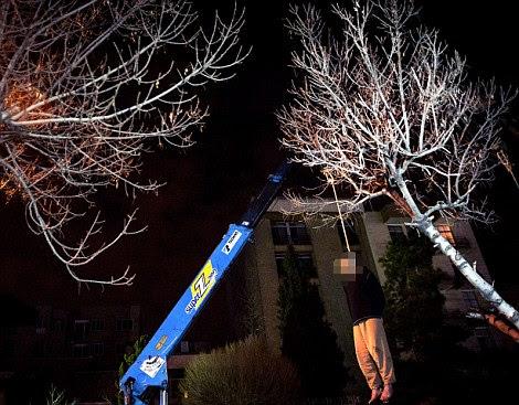 Death penalty: Alireza Mafiha is hanged in public from a crane in Iran's capital, Tehran