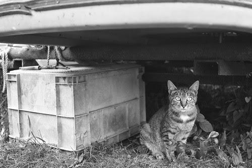 芦ノ湖畔猫