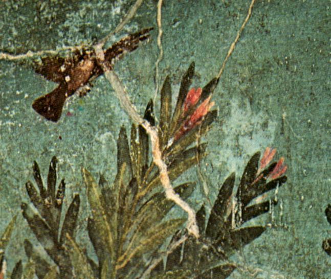 File:Pompei-cubflor2.JPG