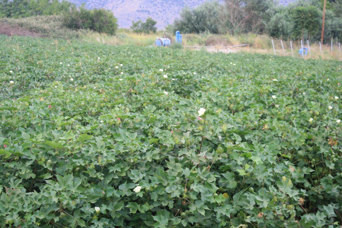 Η Θεσσαλία παράγει το 14,2% της χώρας. Του Δημήτρη Κουρέτα