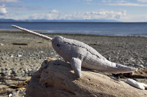 narwhal no.3